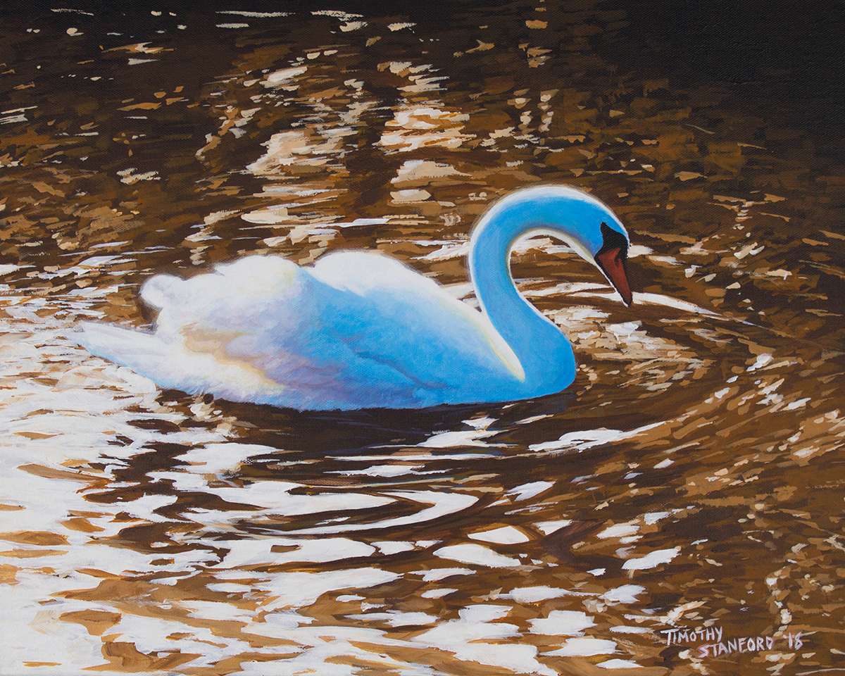This elegant swan drifts serenely along the Delaware Canal at Washington Crossing. The setting sun illuminates its tail feathers with a soft, translucent glow. Warm, amber water radiates outward in ripples that catch the day's fading light.
