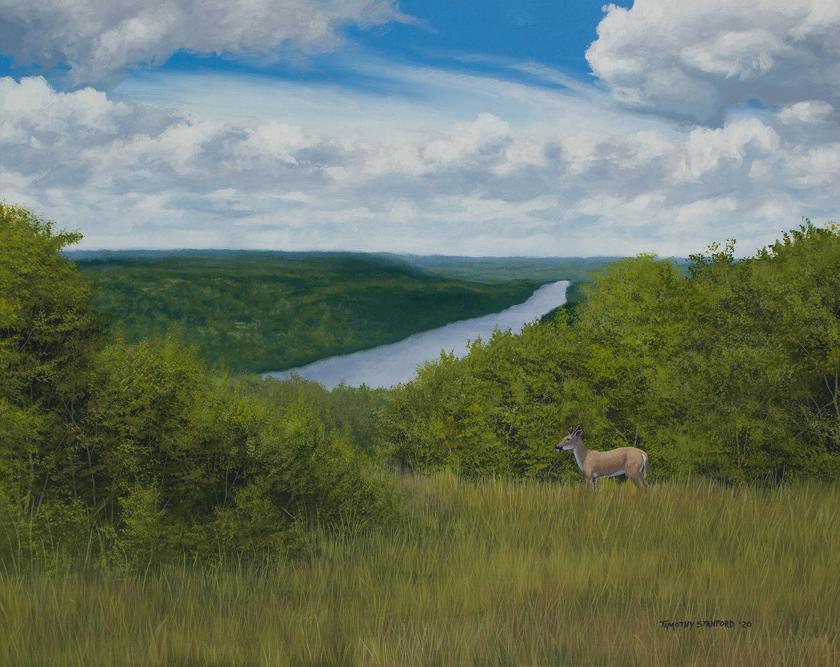 Acrylic landscape painting of Goat Hill Overlook on a sunny summer day with big white fluffy clouds and a young buck in green foliage.