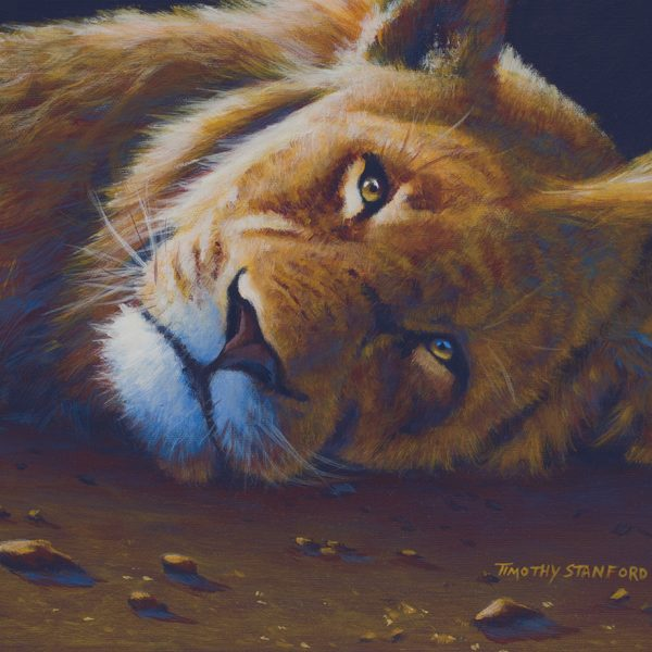 Acrylic wildlife painting of a brown-eyed young lion's face laying heavily on the pebble-strewn ground.