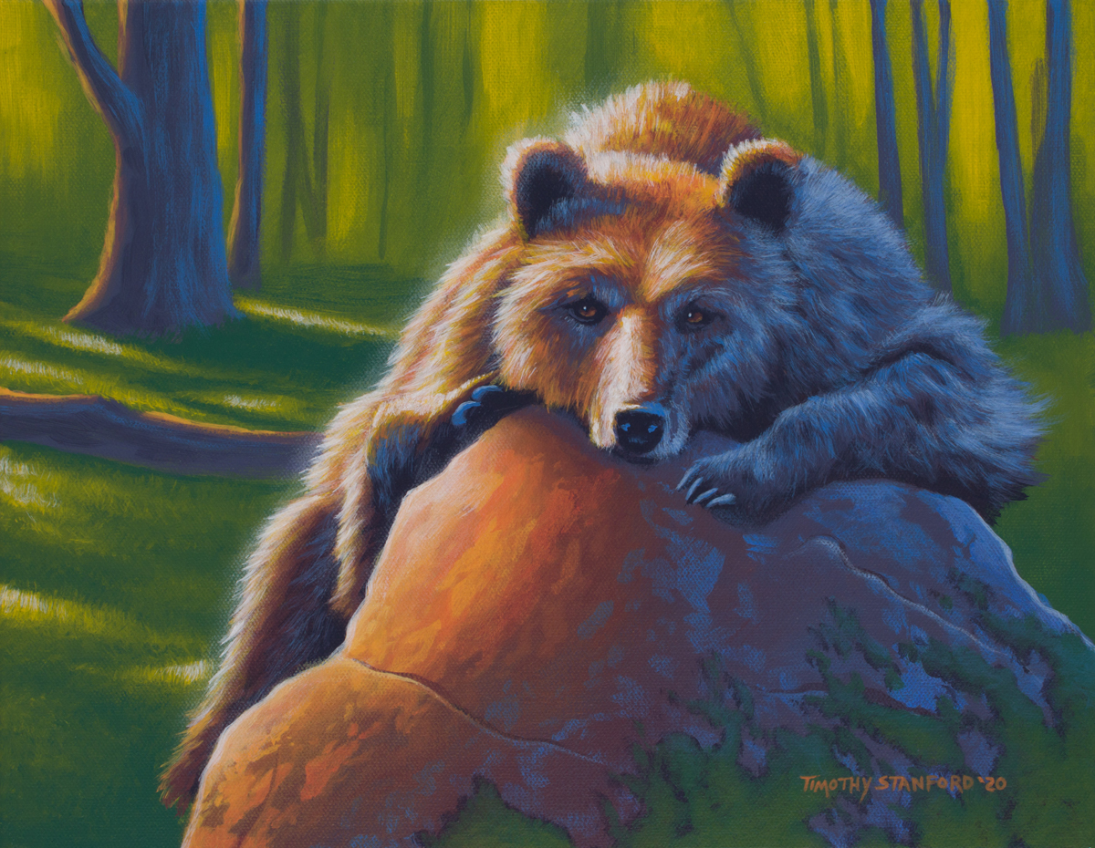 Acrylic wildlife painting of sunlit bear slumped on a rock in a forest.