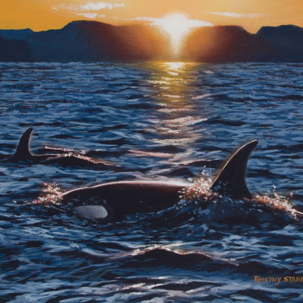 Acrylic wildlife painting of two orca whales in the midst of a choppy sea during sunset.