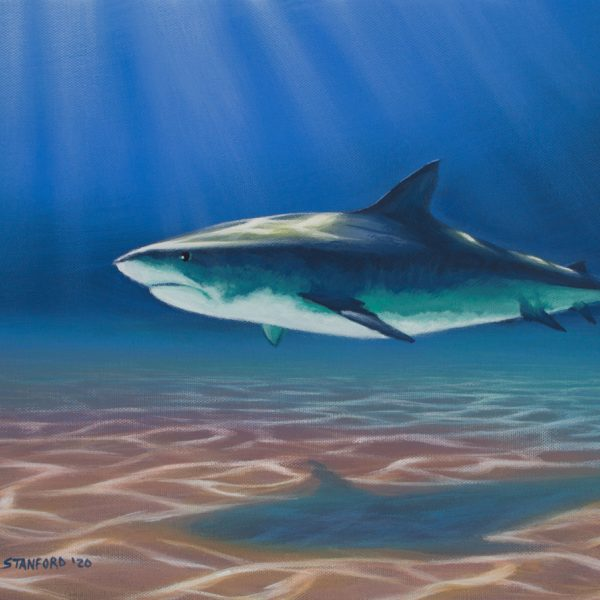 Acrylic wildlife painting of large shark in shallow water.