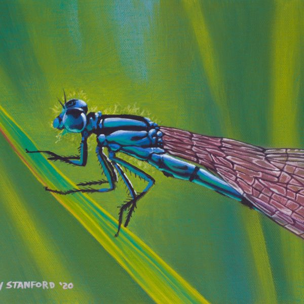 Acrylic wildlife painting of a blue dragonfly on a green plant.