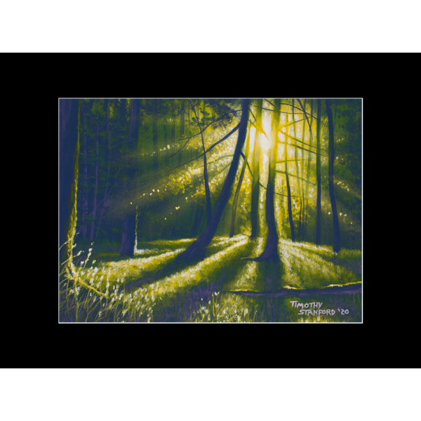"Fine art matted print of Timothy Stanford's original acrylic painting ""Light in the Forest"""