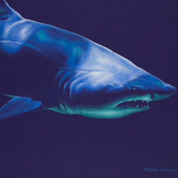 Acrylic wildlife painting of a shark