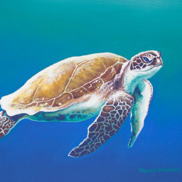 Acrylic wildlife painting of a sea turtle