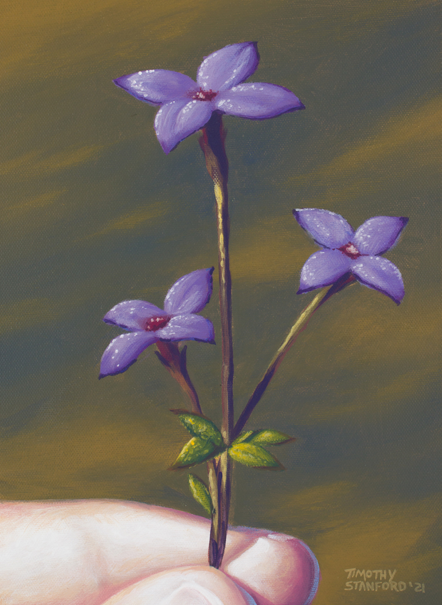 Acrylic painting of fingers holding a purple flower